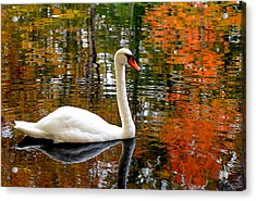 Autumn Swan Acrylic Print by Lourry Legarde