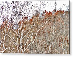 Acrylic Print featuring the photograph Autumn Sycamores by Bruce Patrick Smith