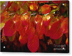 Autumn Acrylic Print by Sylvia  Niklasson
