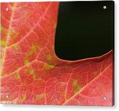 Acrylic Print featuring the photograph Autumn  by Tara Lynn