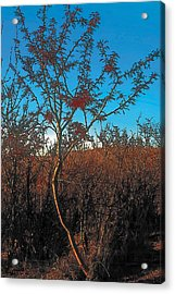 Autumn Acrylic Print by Terry Reynoldson