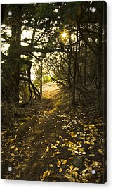 Autumn Trail In Woods Acrylic Print