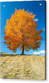 Autumn Tree - 1 Acrylic Print