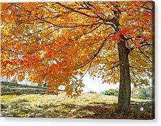 Autumn Tree - 2 Acrylic Print