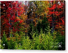 Autumn Tree Foliage Acrylic Print by Lanjee Chee