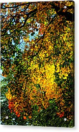 Autumn Tree  Acrylic Print by Tommytechno Sweden