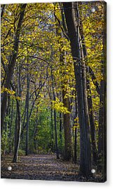 Acrylic Print featuring the photograph Autumn Trees Alley by Sebastian Musial