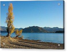 Autumn Trees At Lake Wanaka Acrylic Print by Stuart Litoff