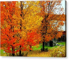 Acrylic Print featuring the photograph Autumn Trees By Barn by Rodney Lee Williams