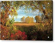 Autumn Trees Acrylic Print by Jim West