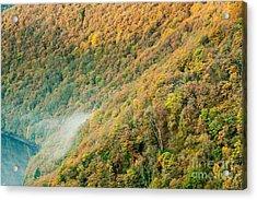 Autumn Trees Acrylic Print by Maciej Markiewicz