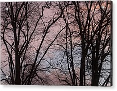 Autumn Trees Acrylic Print by Paul Muscat