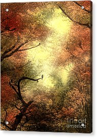 Autumn Trees With Light Shining Through Acrylic Print