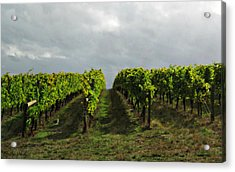 Acrylic Print featuring the photograph Autumn Vineyard by Mindy Bench