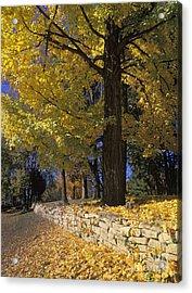 Autumn Wall - Fm000082 Acrylic Print by Daniel Dempster