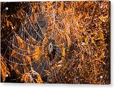 Autumn Web Acrylic Print by Brian Stevens