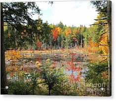 Autumn Wetlands Acrylic Print by Linda Marcille