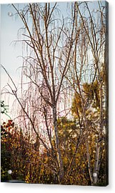 Autumn Wilt Acrylic Print by Mike Lee