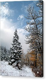 Autumn Winter Colors 2 Acrylic Print