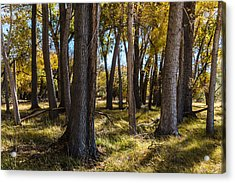 Autumn Wood Acrylic Print