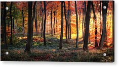 Autumn Woodland Sunrise Acrylic Print by