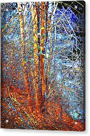 Autumn Woods Acrylic Print by Ann Powell