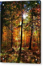 Autumn Woods Acrylic Print by Brook Burling