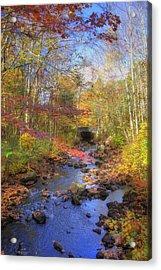 Autumn Woods Acrylic Print by Joann Vitali