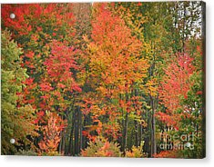 Autumn Woods Acrylic Print by Mary Carol Story