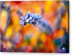Autumnal Berberis Acrylic Print