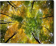 Autumnal Display Acrylic Print by Dave Bowman