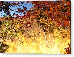 Autumnal Fire Acrylic Print by James Hammen