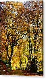 Autumnal Lane Dulverton Acrylic Print