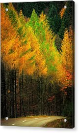 Autumnal Road Acrylic Print