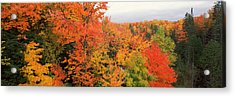 Autumnal Trees In A Forest, Hiawatha Acrylic Print