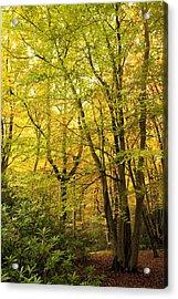 Autumnal Woodland IIi Acrylic Print by Natalie Kinnear