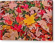 Autumn's Blanket Acrylic Print by SCB Captures