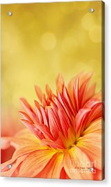 Autumns Calling Card Acrylic Print by Beve Brown-Clark Photography