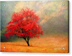 Autumns Colors Acrylic Print by Darren Fisher