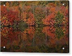 Autumns Design Acrylic Print by Karol Livote