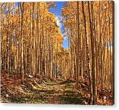 Autumn's Embrace Acrylic Print by Gene Praag