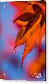 Autumn's Finest Acrylic Print by Anne Gilbert