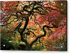 Autumn's Fire Acrylic Print
