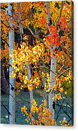 Autumn's Fire Acrylic Print by Jim Garrison