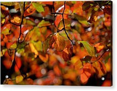 Autumn's Firey Show Acrylic Print