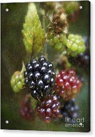 Autumn's Fruit Acrylic Print by Michelle Orai