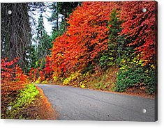 Acrylic Print featuring the photograph Autumn's Glory by Lynn Bauer