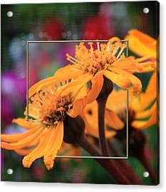 Acrylic Print featuring the photograph Autumn's Glory by Sandra Foster