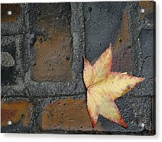 Autumn's Leaf Acrylic Print by Sherry Dee Flaker