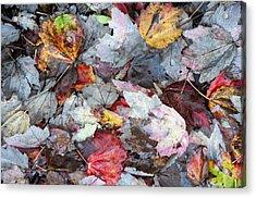 Autumn's Leaves Acrylic Print by Allen Carroll